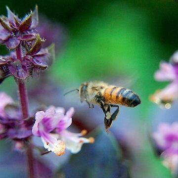 Bee on Basil by JackBridges