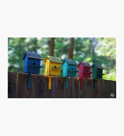 Birdhouse Condos Photographic Print