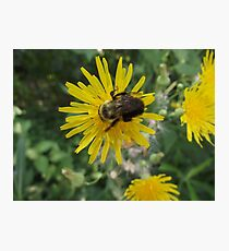 Bee on Flower Macro Photographic Print