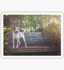 Jack Russel Mix on Bench Sticker
