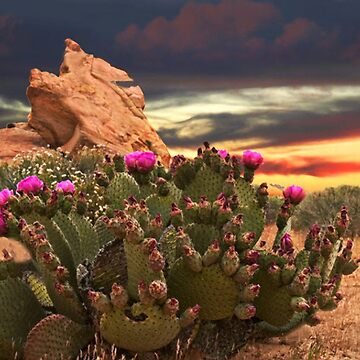 CACTUS PLANT @ VALLEY OF FIRE LAS VEGAS  by Rapture777