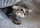 Mikino - Bubble-wrapped 2 by Jaeda DeWalt
