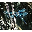 Blue dragonfly by JuliaKHarwood