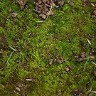 Moss by Sarah Horsman