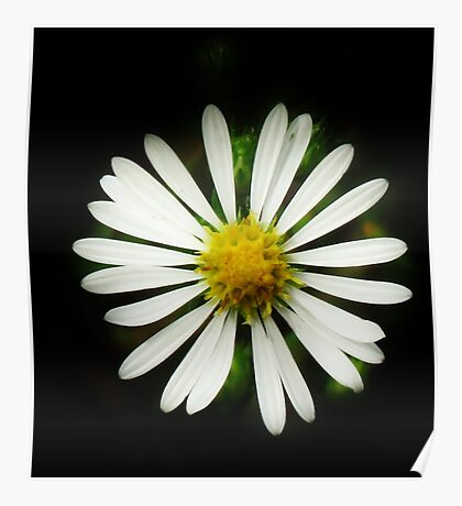 Simply Daisy Poster