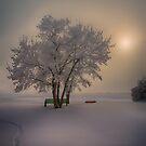 Winter Beauty by IanMcGregor
