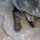 Mikino - Burrowing in Bubble-Wrap by Jaeda DeWalt