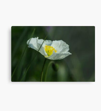 Good Morning White Poppy Metal Print