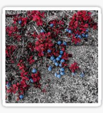 Manitoba Wild Berries Sticker