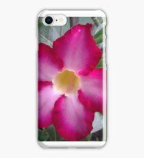 Dessert Rose bursting with color iPhone Case/Skin