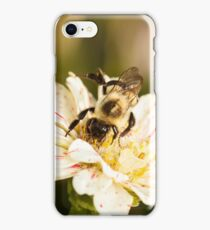 Bumble Bee Collecting Pollen iPhone Case/Skin