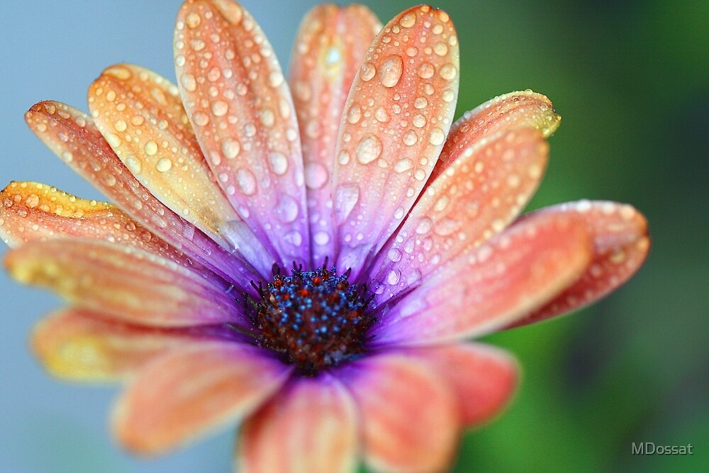 Last Flower Standing by MDossat