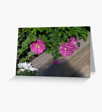 Roses along the Way Greeting Card