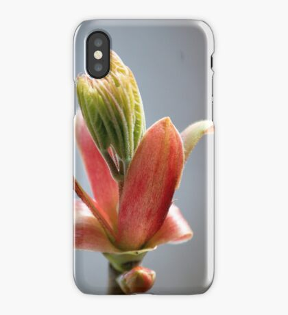 Budding Maple - Memories of Spring iPhone Case