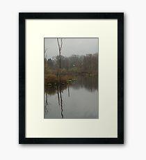 New England Swamp Framed Print