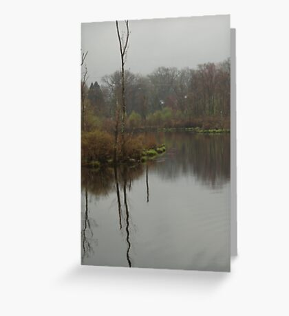 New England Swamp Greeting Card