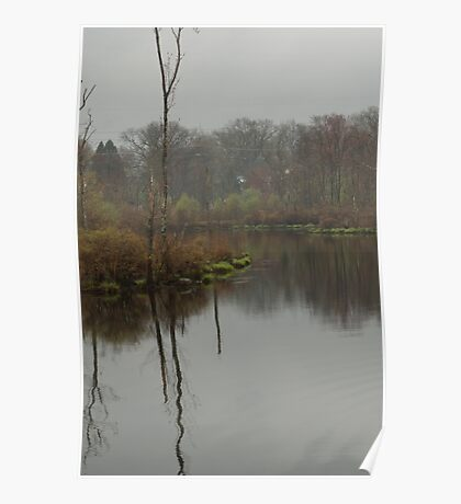 New England Swamp Poster