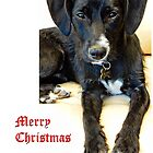 Merry Christmas Dog by Dorothy Berry-Lound