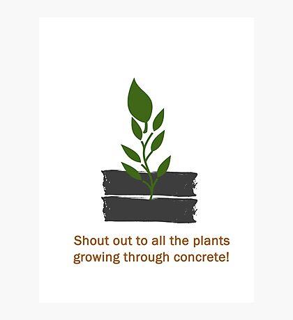 Plants Through Concrete Photographic Print