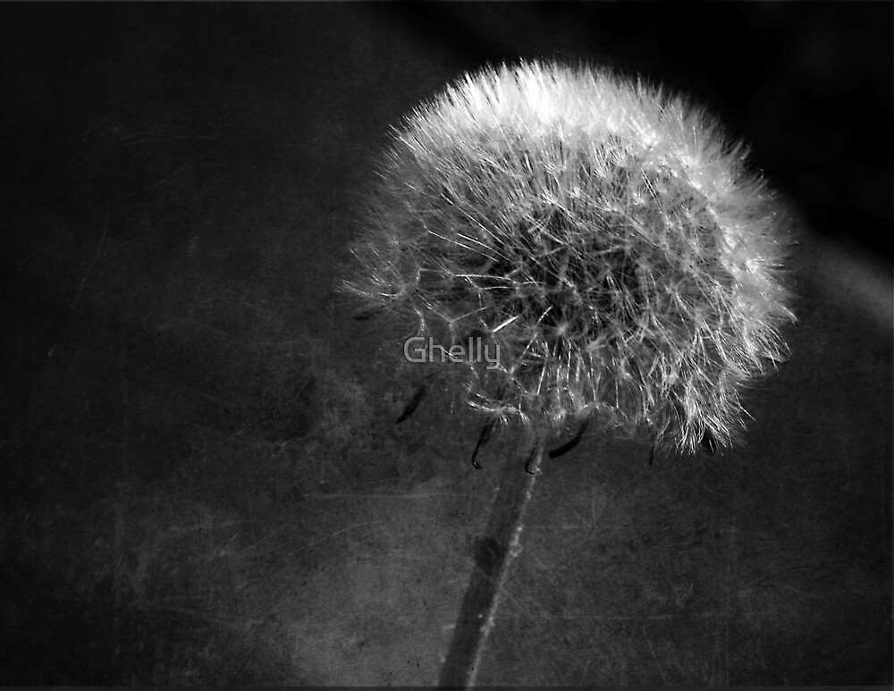 Waiting for the wind by Ghelly