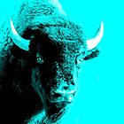 Turquoise Bison by Shellibean1162