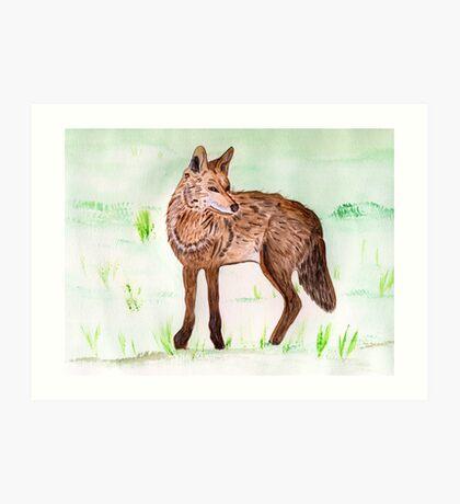 The Coyote Art Print