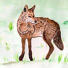 The Coyote by Anne Gitto