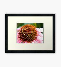 Cone Flower Close-Up Framed Print