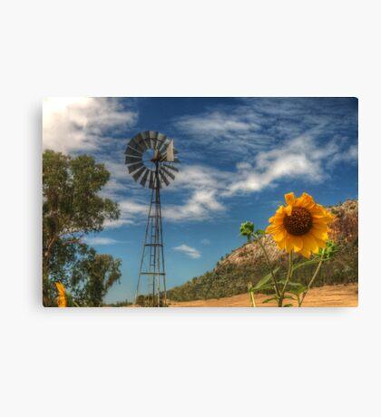 Country Sunshine Canvas Print
