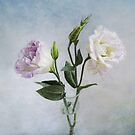 Lavender and White Anemones Still Life by LouiseK