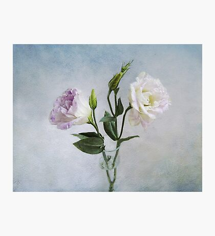 Lavender and White Anemones Still Life Photographic Print