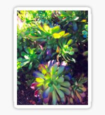 Succulents, Royal Botanic Gardens Sticker