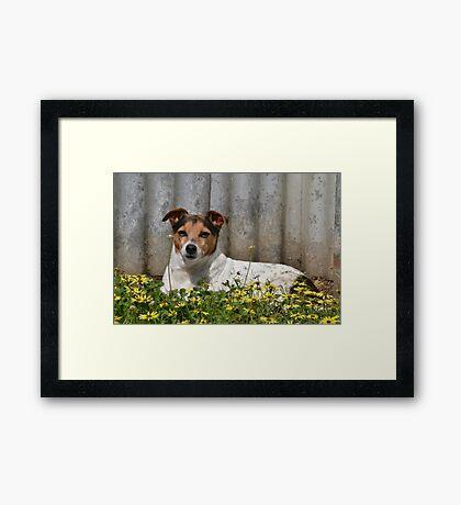 Sweet life Framed Print