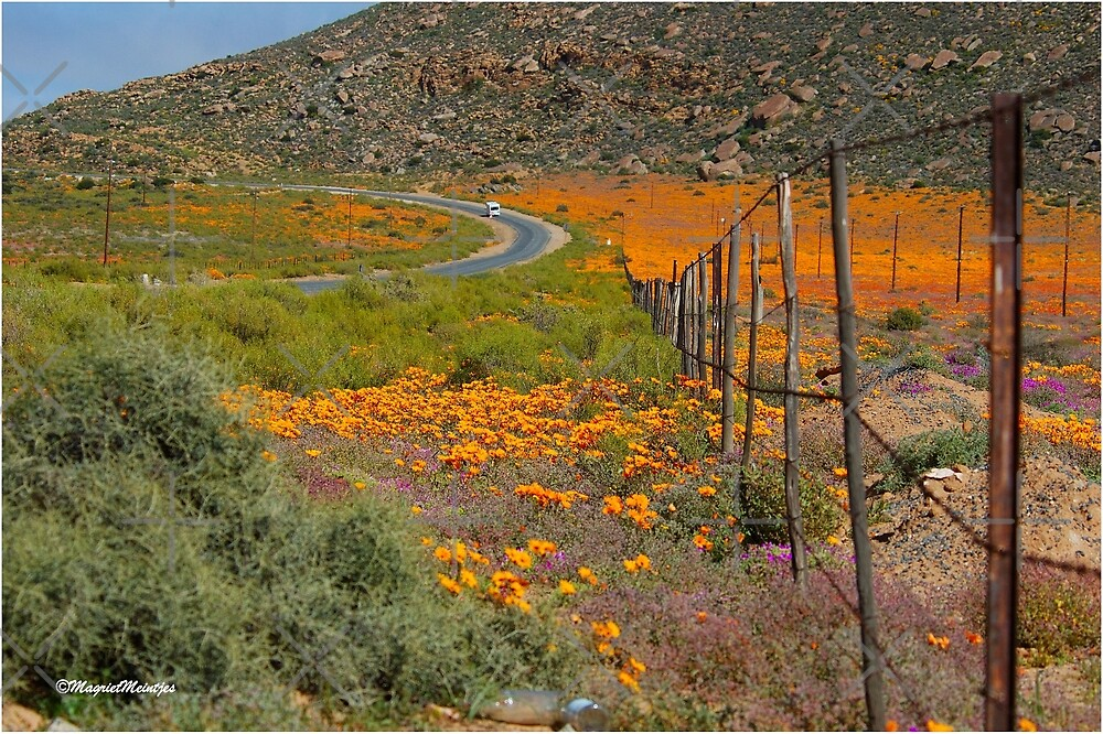 ON THE WAY TO CONCORDIA, NAMAQUA SOUTH AFRICA by Magriet Meintjes