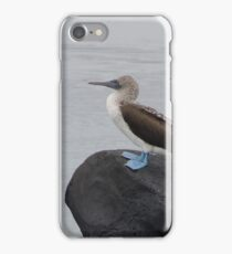 Blue Footed Boobie on a Rock iPhone Case/Skin