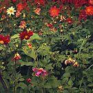 Flower Field by Svetlana Sewell