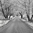 Frosty Sparks Lane by Douglas  Stucky
