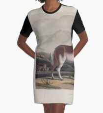 African Scenery and Animals Samuel and William Daniell 1804 0049 The Quahkah_jpg Graphic T-Shirt Dress