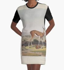 African Scenery and Animals Samuel and William Daniell 1804 0057 The Springbok or Leaping Antelope_jpg Graphic T-Shirt Dress