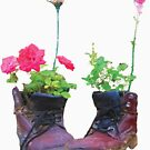 Old shoes with flowers by Rostislav Bouda