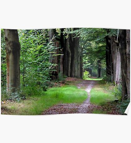 Walking under mid-September trees again Poster
