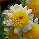 A Little Ray of Sunshine by Penny Smith
