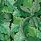 Green Acantus by kridel