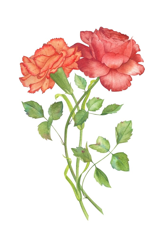 Quot Rose And Carnation Flower Illustration Quot By Olga Chuykova