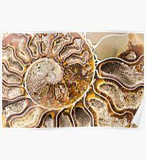 Spiral Ammonite fossil Poster