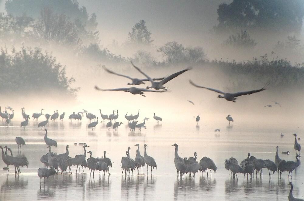 Cranes In Fog by Birdchick