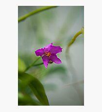 violet garden delicate flower Photographic Print