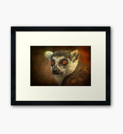 Lemur Framed Print