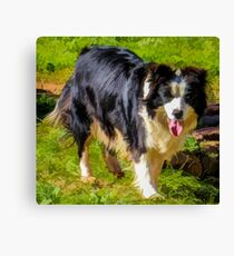 Border Collie - Color Canvas Print