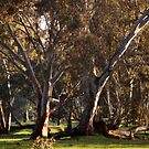 Our Country Trees by Lozzar Landscape